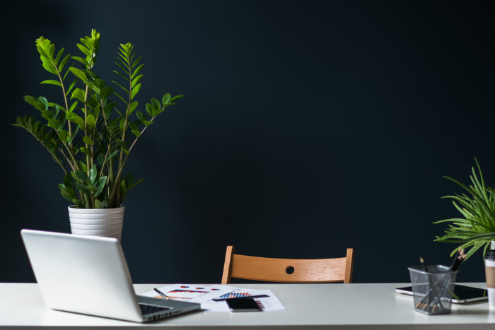 Plants are important when designing an office space